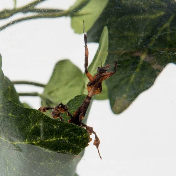 BUGzzz L insects stay 5000ml close up